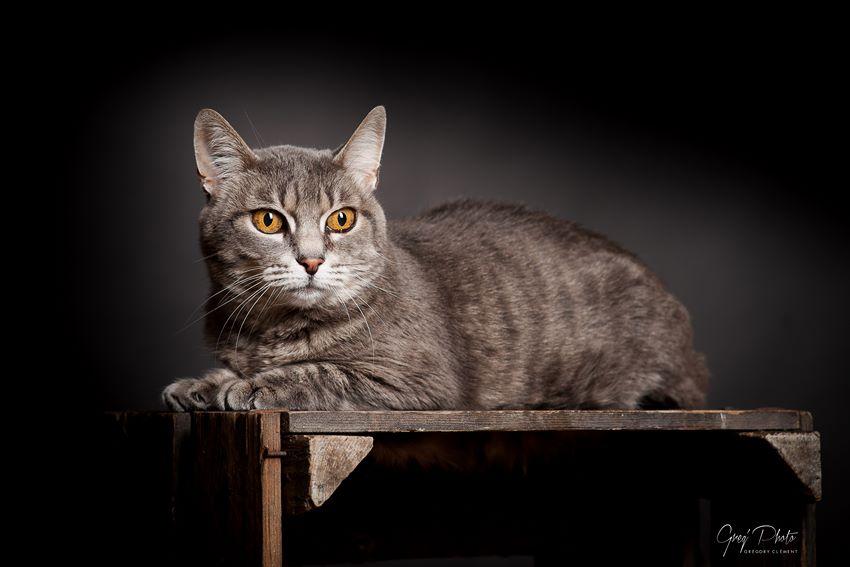 Photographe animalier Luxembourg gregphoto.fr 1