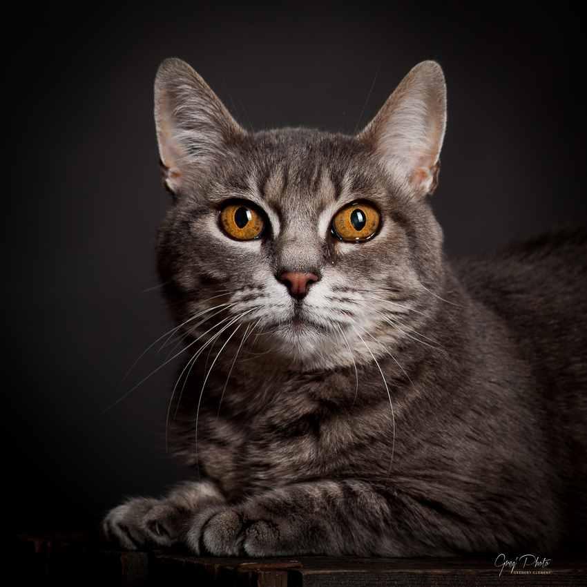 Photographe animaux de compagnie Nancy gregphoto.fr 1