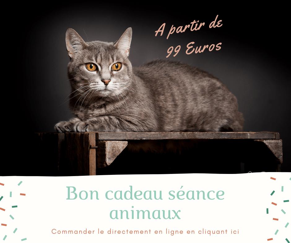 Bon cadeau séance photos animaux Nancy Toul Neufchateau